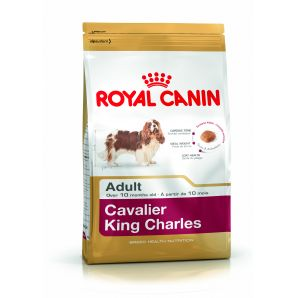 Cavalier King Charles  1.5kg & 7.5kg From